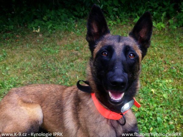 Testování čelovky Decathlon ONnight 50 jako osvětlení záchranářského psa